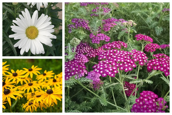 Perennial collage