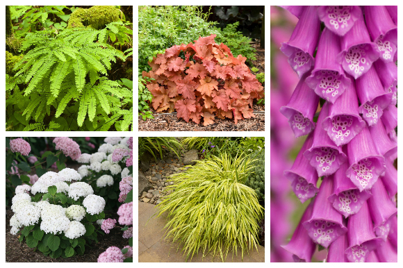 Plants for shady spots