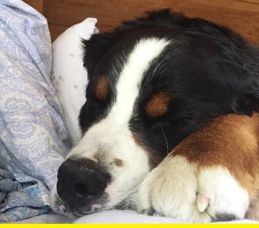 Sleepy waffle.