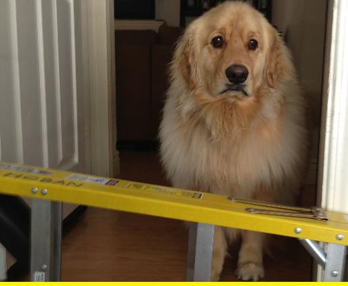 Ladder dog.