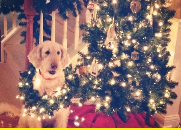 CHristmas dog.