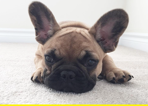 All ears.