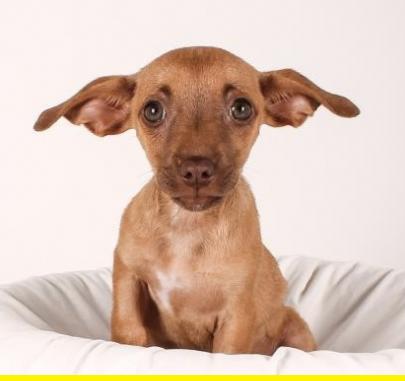 Puppy ears.